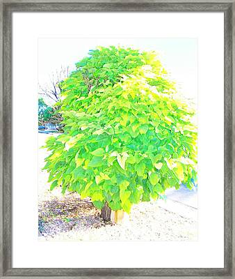 Framed Print featuring the photograph Obese American Tree by Lenore Senior