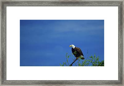 Observe And Report Framed Print