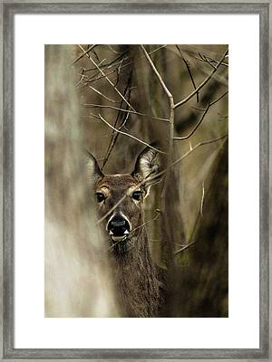 Framed Print featuring the photograph Observed  by Bruce Patrick Smith
