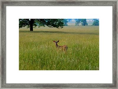 Observer Framed Print
