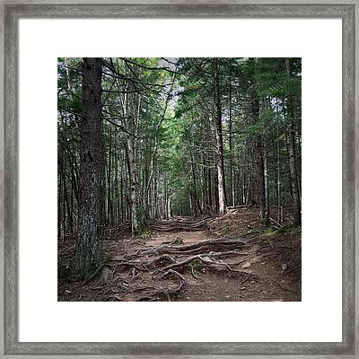 Obstacles Framed Print by Christine Sharp