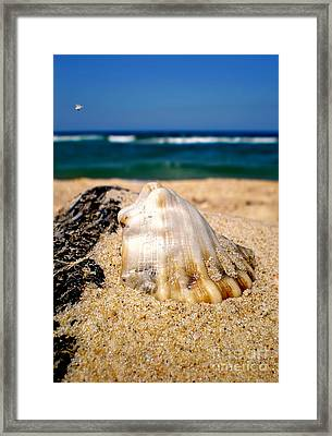 Ocean Beyond A Shell Framed Print