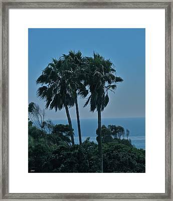 Ocean Brezze Palms Framed Print by Debra     Vatalaro