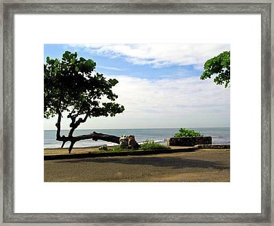 Ocean Formed Tree Framed Print by Douglas Barnett
