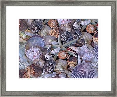 Ocean Gems 11 Framed Print by Lynda Lehmann