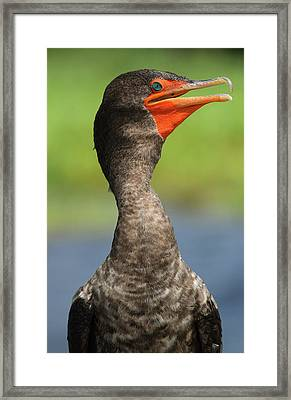 Ocean In Its Eyes Framed Print