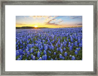 Ocean Of Bluebonnets At Sunset 1 Framed Print by Rob Greebon