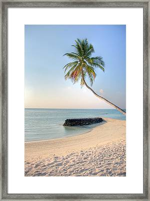 Ocean Palm Framed Print by Shawn Everhart