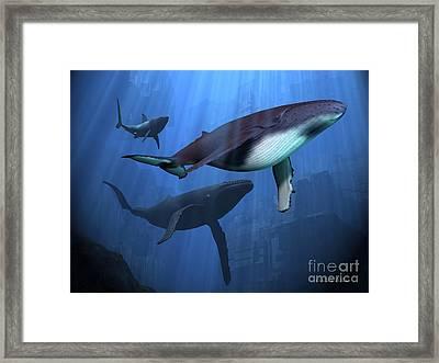 Ocean Ruins Framed Print by Corey Ford