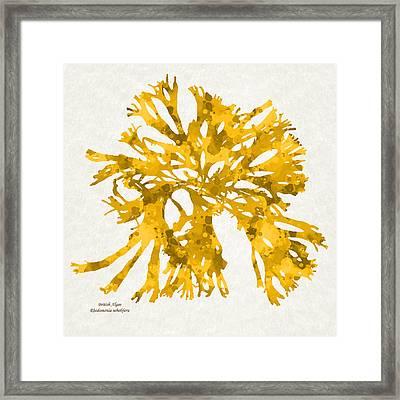 Ocean Seaweed Plant Art Rhodomenia Sobolifera Square Framed Print by Christina Rollo
