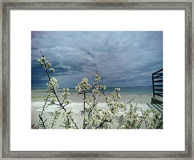 Ocean Spring Framed Print by Robert Nickologianis