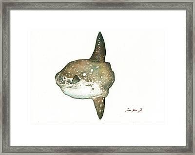 Ocean Sunfish Mola Mola Framed Print