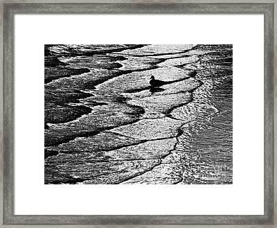 Ocean Surf Beach Scene In Black And White Format Framed Print by Carol F Austin