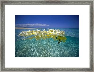 Ocean Surface Framed Print by Vince Cavataio - Printscapes