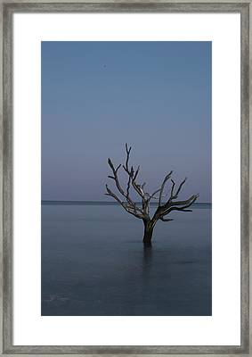 Ocean Tree Framed Print