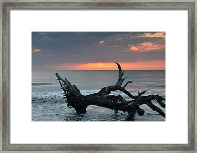 Ocean Treescape At Sunrise Framed Print by Bruce Gourley