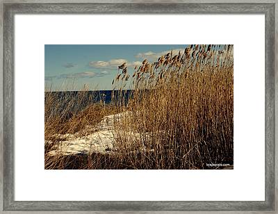Ocean View Through The Grasses Framed Print by Lois Lepisto