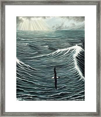 Oceanic Wanderer Framed Print by Philip Harvey