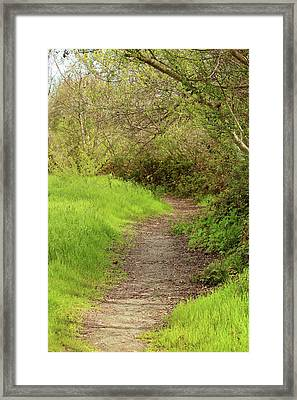 Framed Print featuring the photograph Oceano Lagoon Trail by Art Block Collections