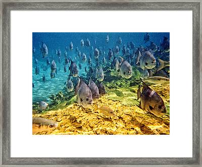 Oceans Below Framed Print