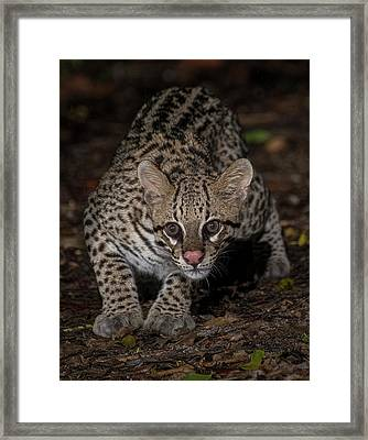 Framed Print featuring the photograph Ocelot #1 by Wade Aiken