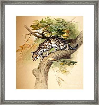 Ocelot, 1851 Framed Print