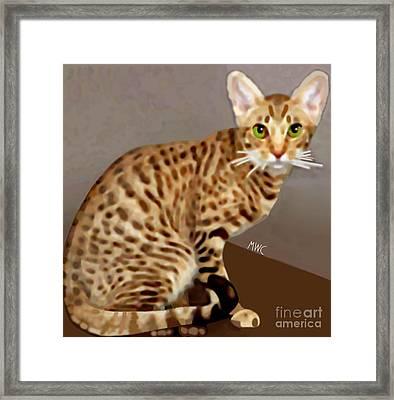 Ocicat Framed Print