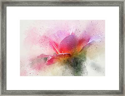 O'connor Rose Abstract Framed Print
