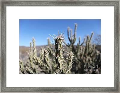Ocotillo Framed Print