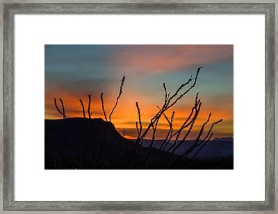 Ocotillo At Sunset Framed Print