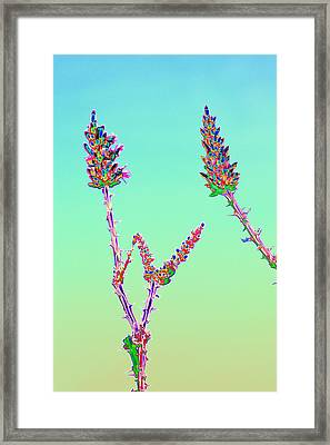 Ocotillo Blossums After Too Much Tequila Framed Print by Richard Henne