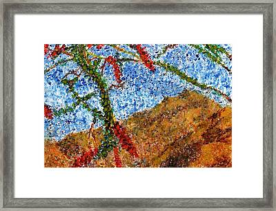 Ocotillo In Bloom Framed Print by Cynthia Ann Swan