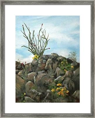 Ocotillo In Bloom Framed Print by Roseann Gilmore