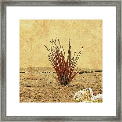 Ocotillo - The Desert Coral Framed Print