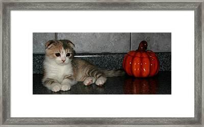 October 2005 Framed Print