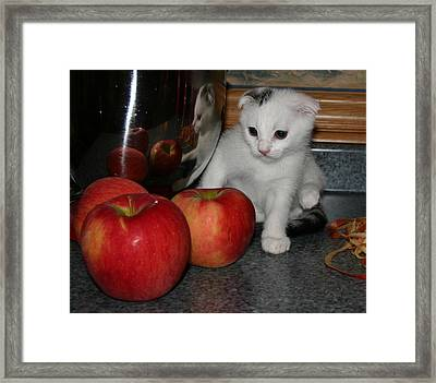 October 2006 Framed Print