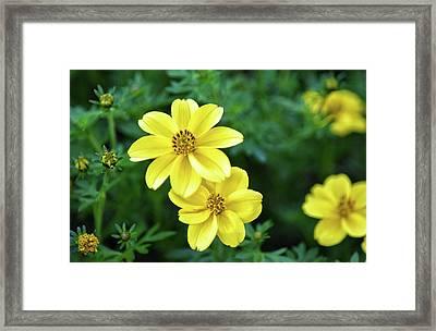 October Beauty Framed Print