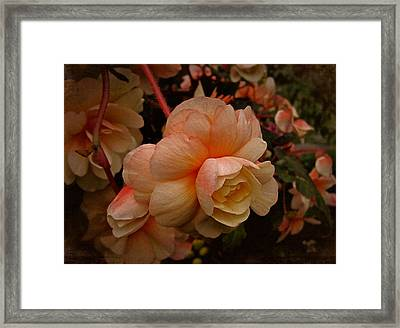 Framed Print featuring the photograph Vintage Begonia No. 2 by Richard Cummings