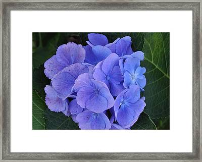 October Color Framed Print by JAMART Photography
