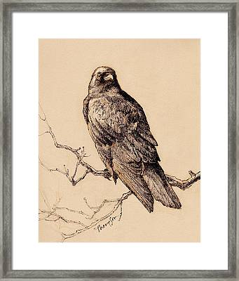 October Crow Framed Print by Tracie Thompson