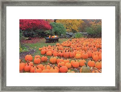 October Harvest Framed Print by John Burk