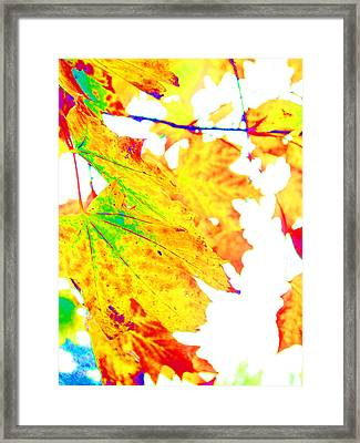October Leaves Framed Print by Nick Gustafson