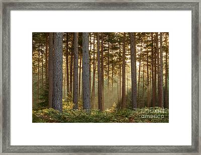 October Morning New Forest Framed Print by Richard Thomas