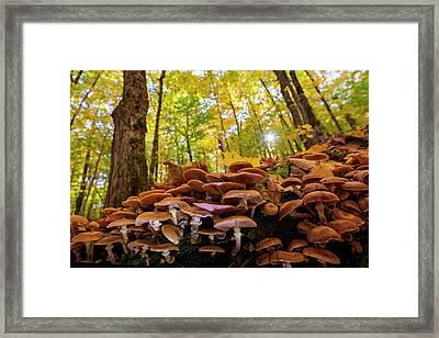 October Mushroom Framed Print