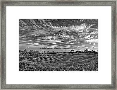 October Patterns Bw Framed Print