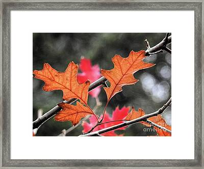 Framed Print featuring the photograph October by Peggy Hughes