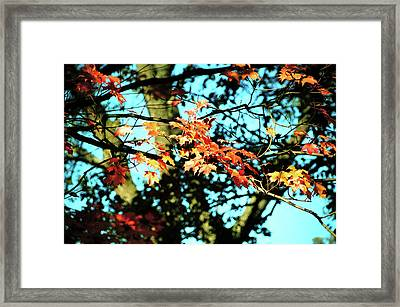 October Road Framed Print by JAMART Photography