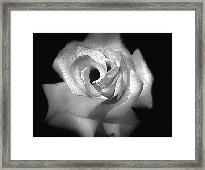 Framed Print featuring the photograph October Rose by Donna Kennedy