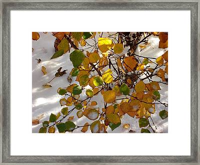 October Snow Framed Print by Marilynne Bull