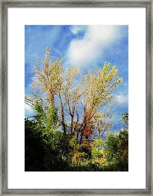 October Sunny Afternoon Framed Print